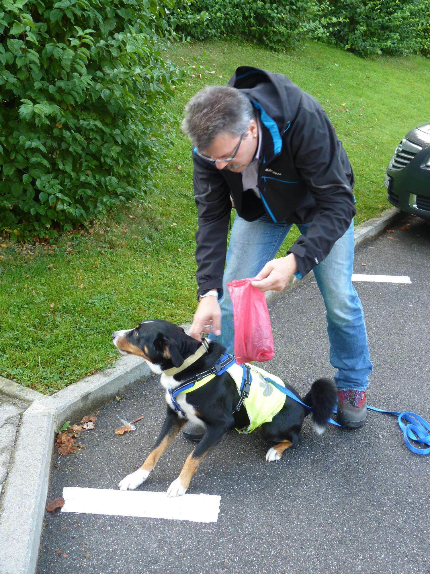 Dlt Dog Leader Training